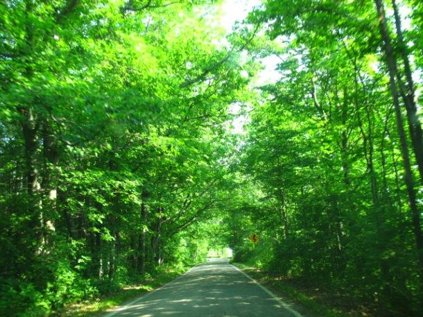 Tunnel of Trees, Northern Michigan